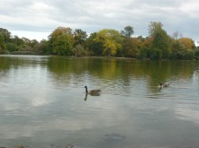 Chilling with the ducks at Prospect