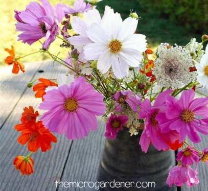 9 Reasons You Should Grow Cosmos Flowers   The Micro Gardener Arrange your cosmos in a vase with other blooms for a pop of cheery colour
