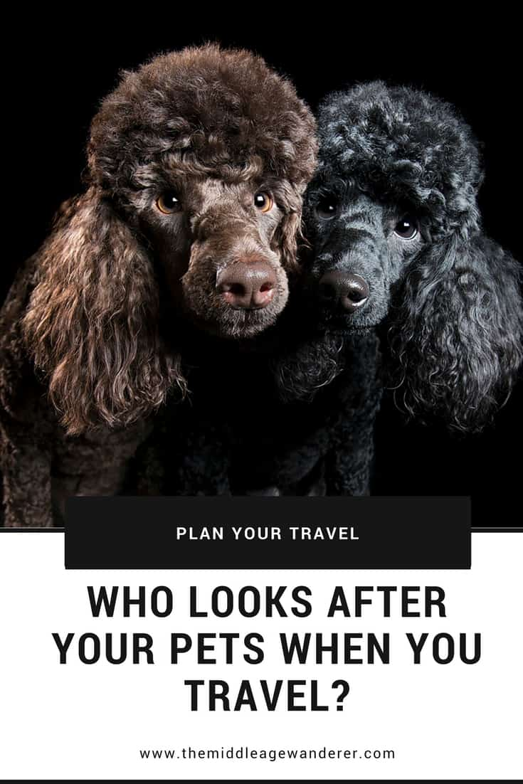 Who looks after your pets while you travel? Making sure your pets are safe while you are away means you will have peace of mind while travelling.