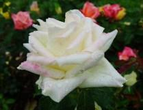 Flower for MG