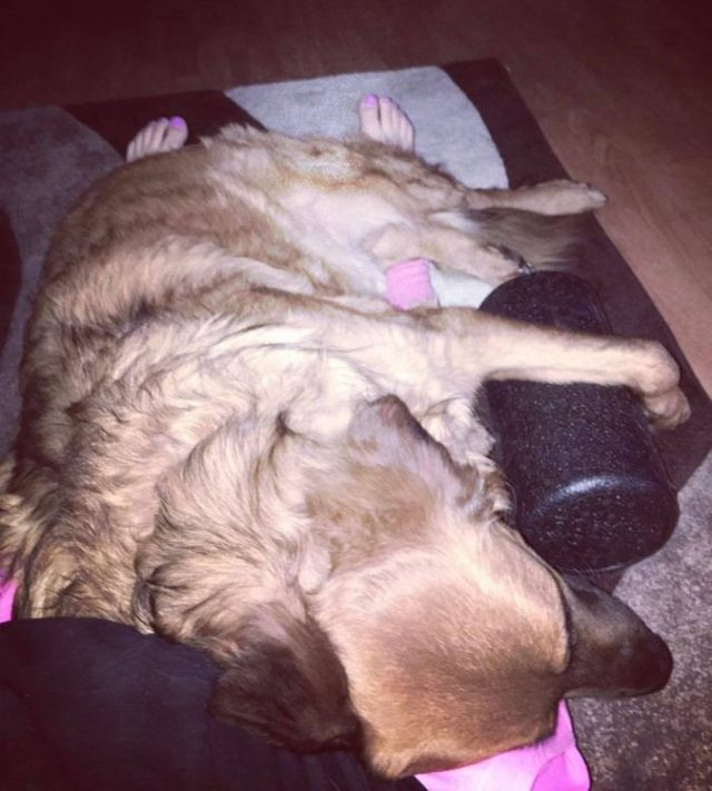 service dog lying on a woman's legs