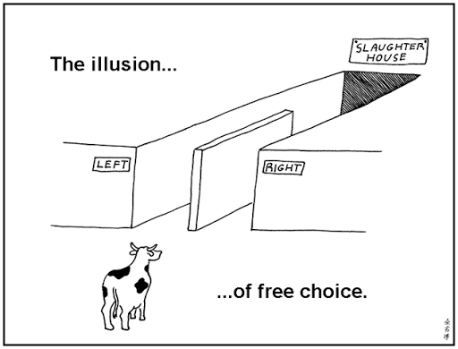 elections illusion of free choice