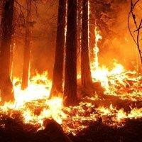 fire disasters wildfire Knysna Santa Rosa Paradise Black Friday Australia