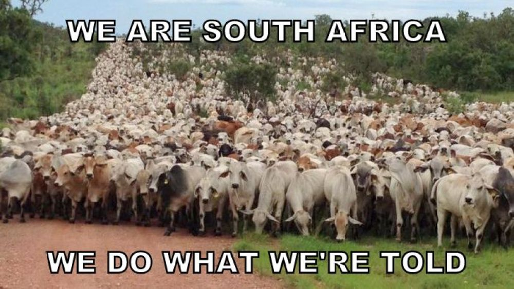 south africa apathy masses herd rape cyril ramaphosa piet bergh eleanore spies mmusi maimane