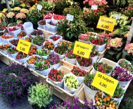 Tulips in Amsterdam, holland, floating flower market, bloemenmarkt