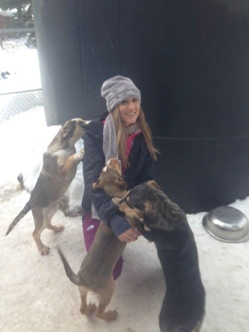 Dog sledding Whistler, Canada