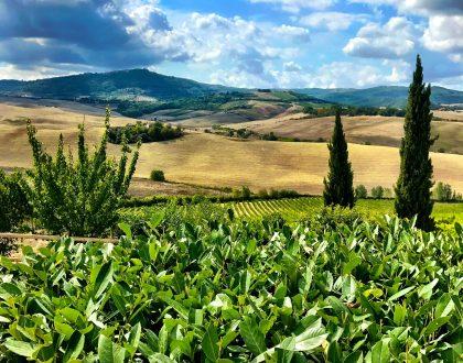 Altesino in Italy
