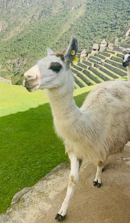 Machu Picchu 2020