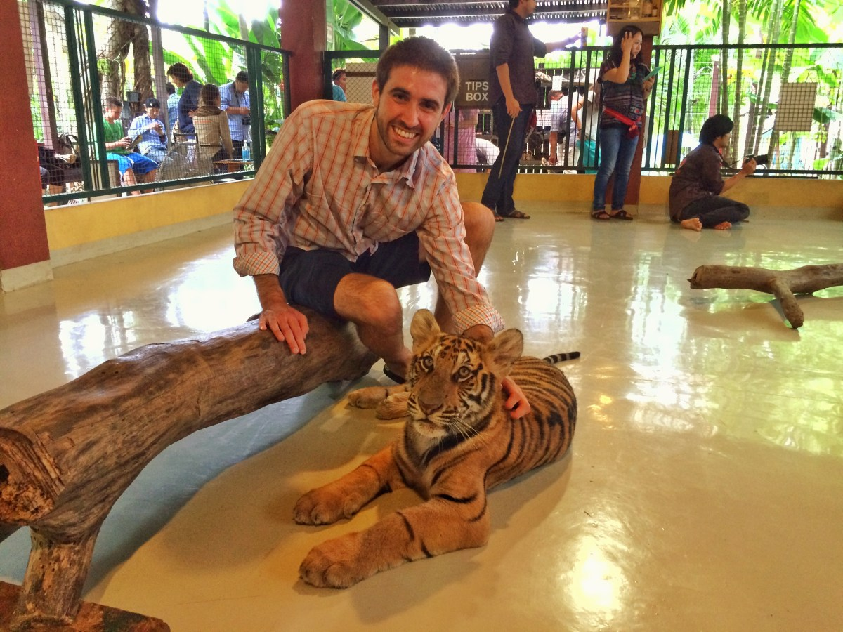 Should You Visit Tiger Kingdom? - Chiang Mai, Thailand