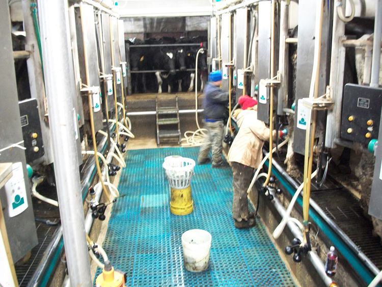 "Workers milking cows on Steve Schmitz's dairy farm in Richland Center, Wisconsin, in 2015. ""It seems like workers and farmers are facing more problems surviving today,"" Schmitz said."