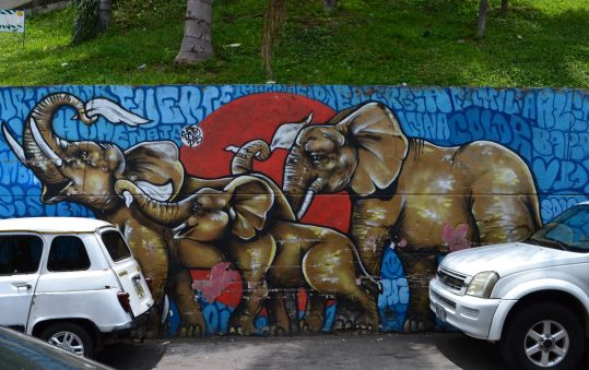 Elefanti e memoria, S. Mesa Paniagua e G. Maugeri