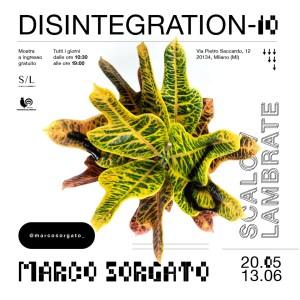 Marco Sorgato: l'artista millennial che indaga il rapporto uomo-natura