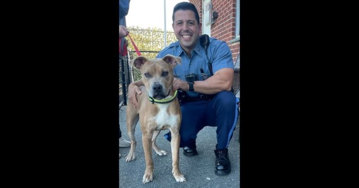 Owner Arrested After Dog Is Left to Die in Cruelest Circumstances