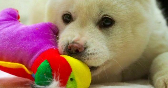 After Heroically Rescuing Owner, Dog Gets Huge Award from Nation