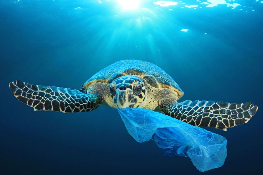 Good News for Today - More than a third of the world's sea turtles have been found with plastic waste in their stomachs