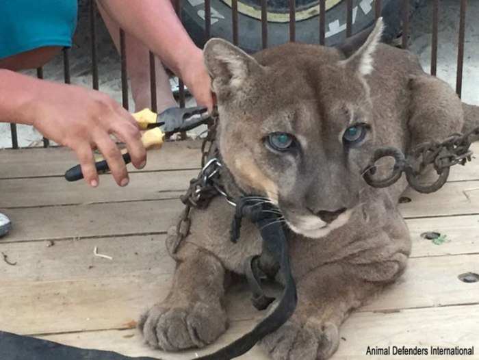 Wild Animals Around The World Have This Incredible Organization To Thank For Their Rescues
