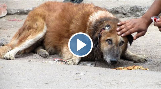 This Dramatic Dog Rescue Will Have You Crying With Joy When You See How It Ends