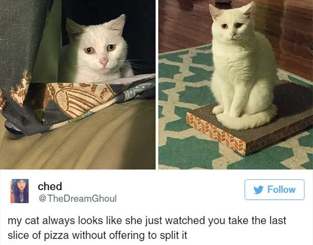 15 Funny Tweets About Cats