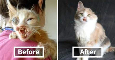 This Disfigured Cat Was Ignored By Everyone. Then A 7-Year-Old Girl Did Something Incredible