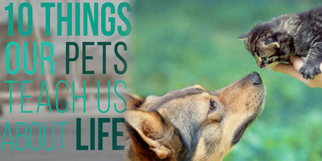 10 important things our pets teach us about life