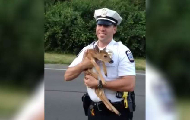 A Policeman Found A Helpless Fawn In The Middle Of The Road…And Became Our Hero