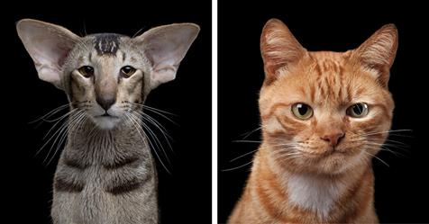 Intimate Animal Portraits Capture Unique Quirks and Personalities of Cats, Dogs, and Horses