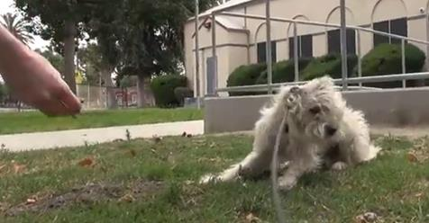 This Pup Was Terrified Of People, But Rescuers Took Away His Fears