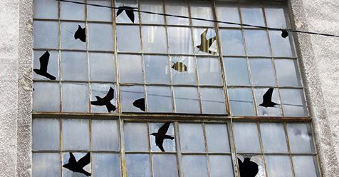 Birds Appear in the Negative Space of Shattered Windowpanes in a New Intervention from Pejac