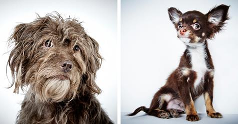 Portraits of Once-Neglected Dogs Showcase Their Incredible Spirit After Being Rescued
