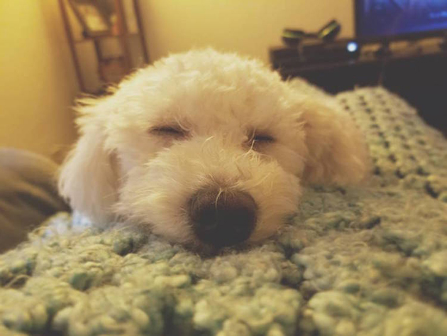 Psychologist Discovers That Dogs Dream About the Humans They Love