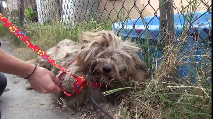 Dog Who Had Been Homeless His Entire Life Makes Incredible Transformation
