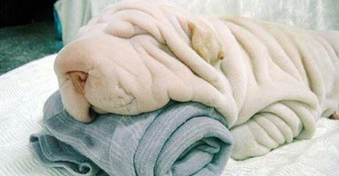 21 Hilarious Animals Who Are Convinced They're Masters of Disguise