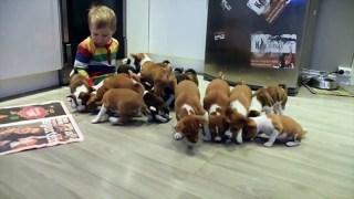 Have You Ever Wondered What It's Like to Live With 16 Puppies?