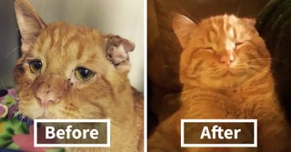 Couple Adopts 'Saddest Cat' In The World Nobody Wanted, Here's How Kitty Transformed In One Hour