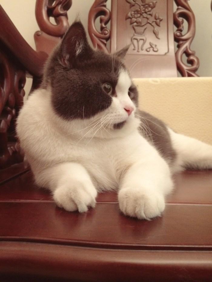 banye-surprised-cat