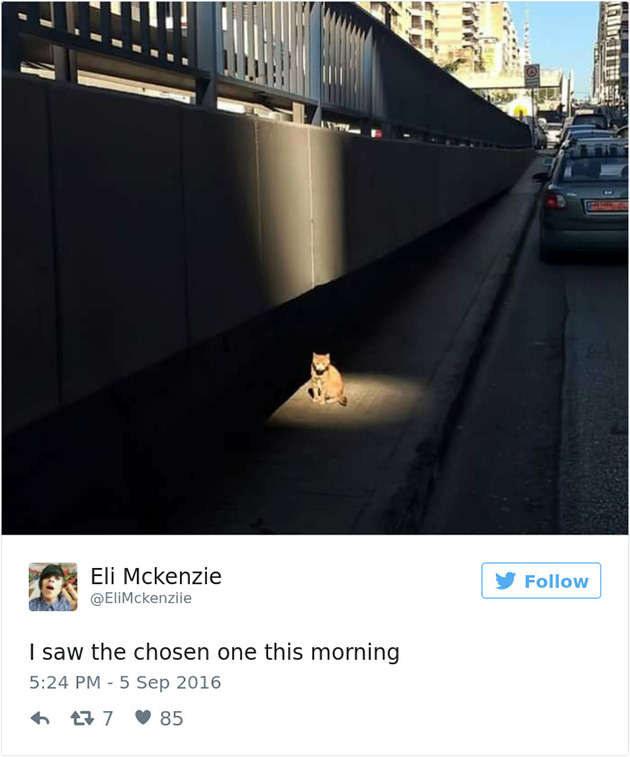 best cat tweets