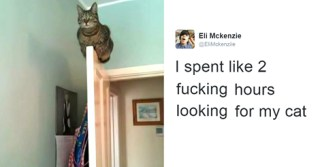 10+ Of The Best Cat Tweets Of 2016