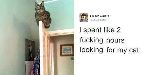 10+ Of The Best Cat Tweets Of 2016