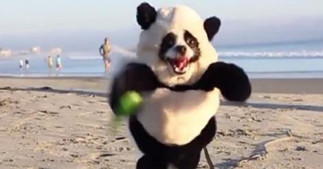 Happiest 'Panda' In The World Spotted At The Beach