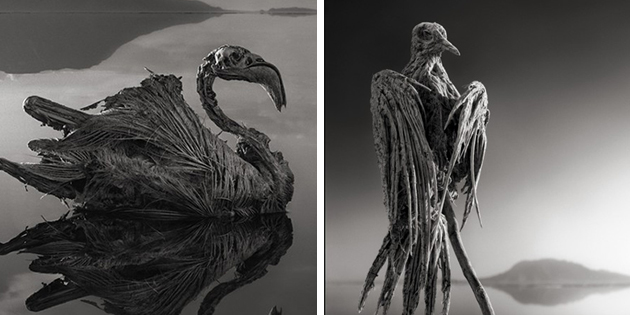 Africa S Lake Natron Turns Animals Into Stone