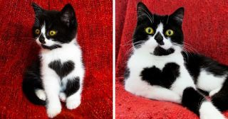 Cuddly Cat Wears Her Heart on Her Chest… Literally