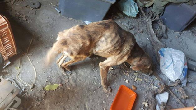 dog with broken spine