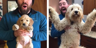 24 Adorable Then and Now Photos of Dogs Who Are the Same Puppies But Bigger