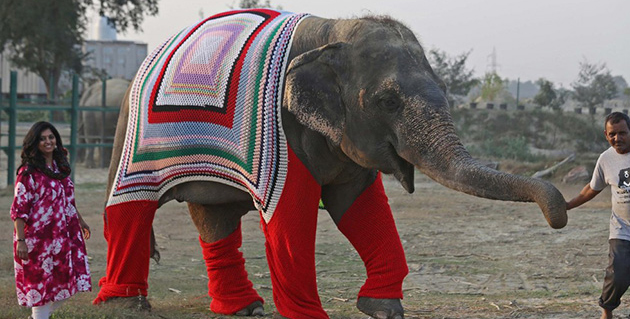 Villagers Create Adorable Sweaters for Rescue Elephants to Help Keep Them Warm