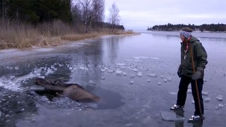 A Compassionate Couple Saves a Stranded Moose Who Fell Through the Ice on a Frozen Lake