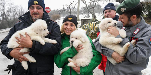 Three Puppies Rescued After Deadly Italian Avalanche