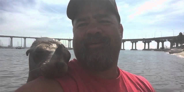 Precious Seal Wants To Make Friends With This Guy, And It's Beyond Hilarious .