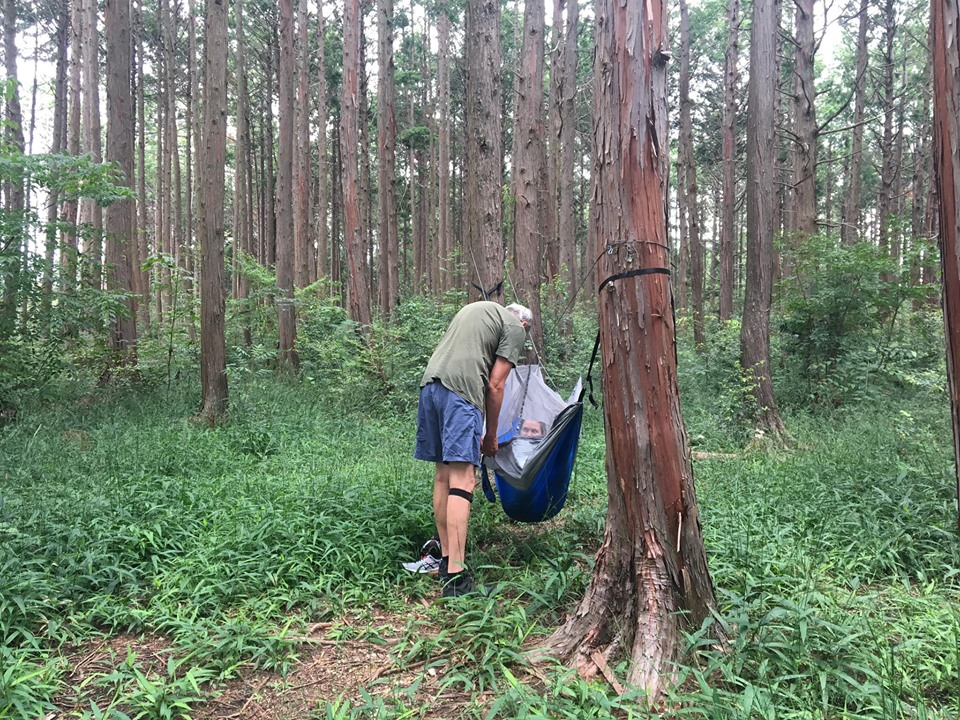 Planning forest bathing in Kyoto by bringing a hammock to prevent mosquito