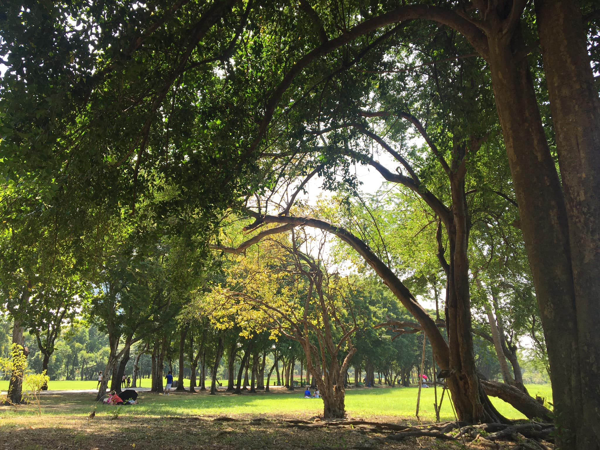 Experience forest bathing in a park with lots of tall trees
