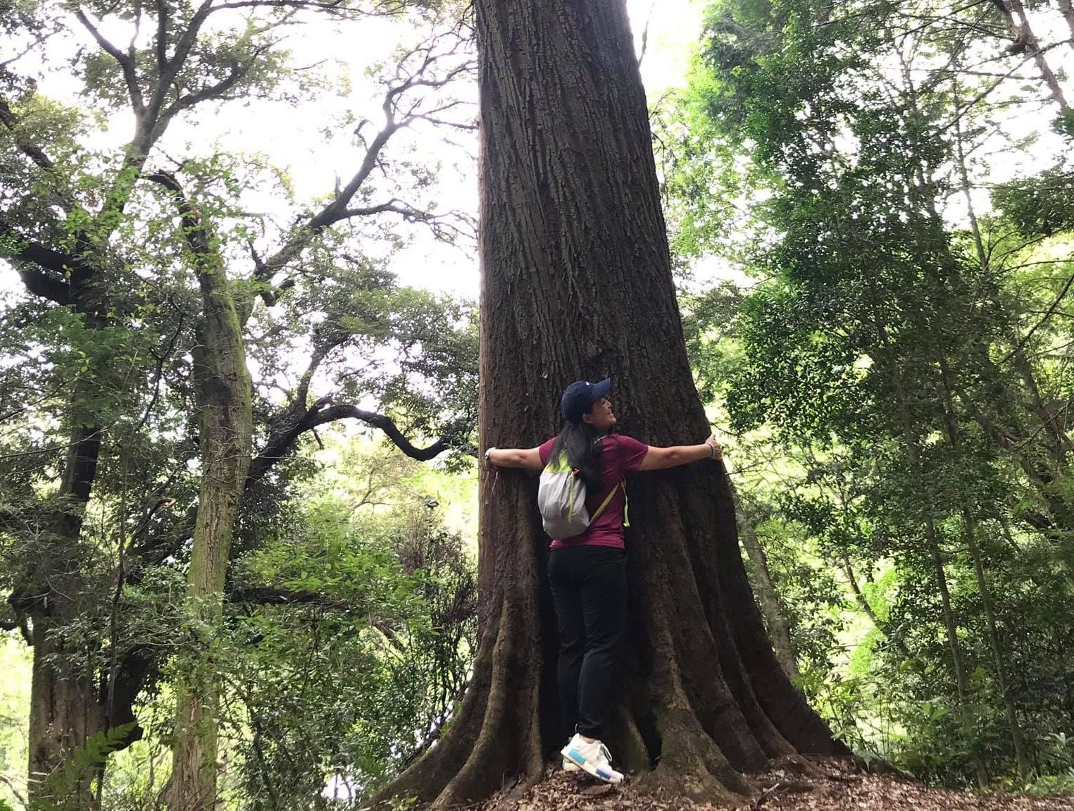 Experience forest bathing A woman hugs a very big tall tree